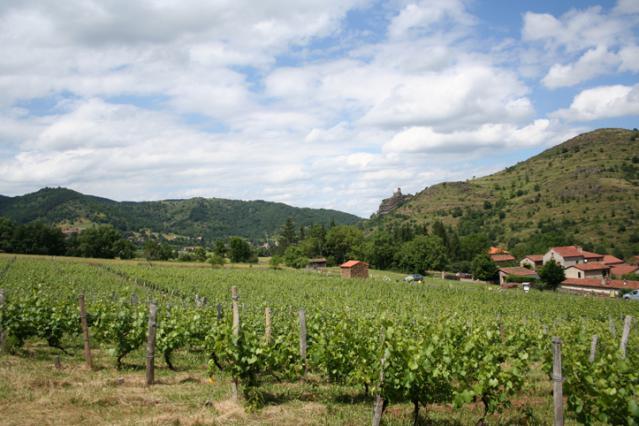 Les vignes de la Ribeyre près de Saint-Ilpize