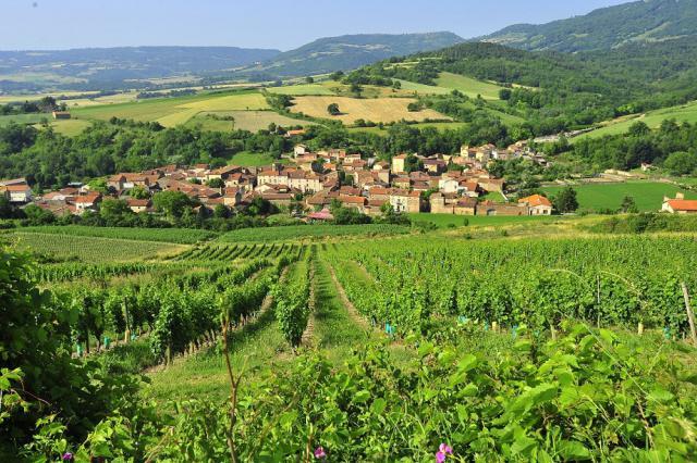 Vignoble de Boudes