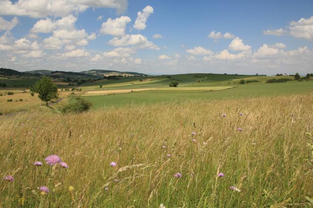 Paysage du Devès, terres cultivées