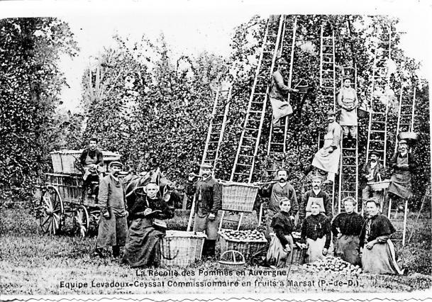 Cueillette des pommes à Marsat, carte postale