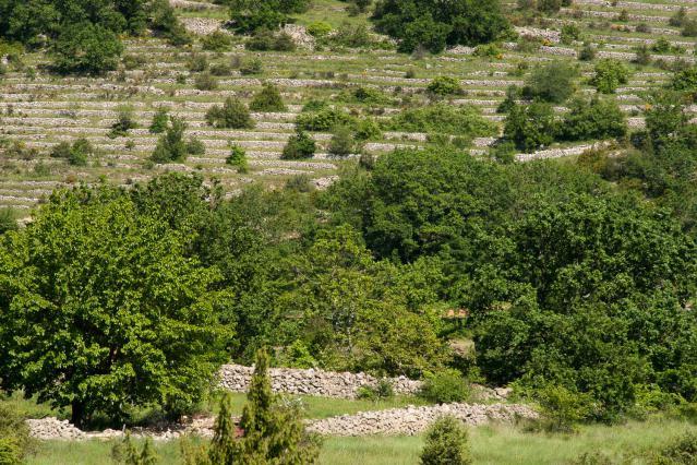 Terrasses abandonnées en vallée de l'Ibie