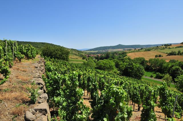 Sur les terrasses de vigne près de Boudes