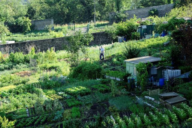Jardins ouvriers à Montreynaud