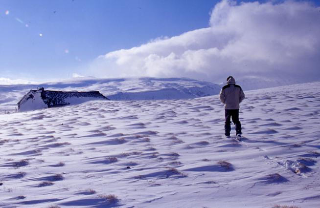 Buron dans la neige
