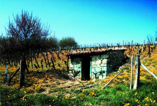 Tonne de vigne à Egliseneuve-Près-Billom