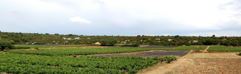 Viticulture et lavandiculture sur la commune de Bidon
