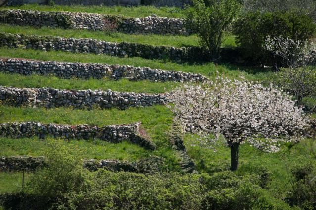 Terrasses entretenues à Saint-Andéol-de-Berg