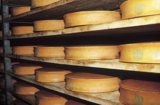 Les fromages Abondance doivent être affinés en cave pendant 100 jours minimum