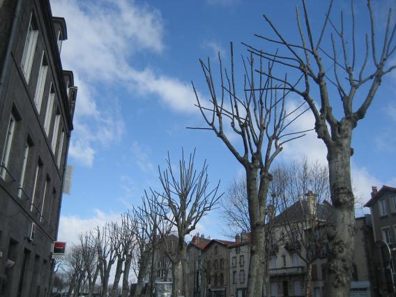 Platanes, boulevard Desaix