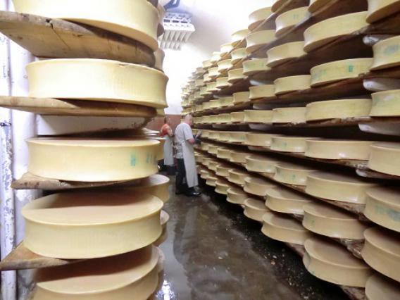 Coopérative laitière de Moûtiers, affinage du Beaufort