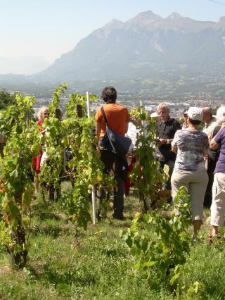 Visite des vignes de farette